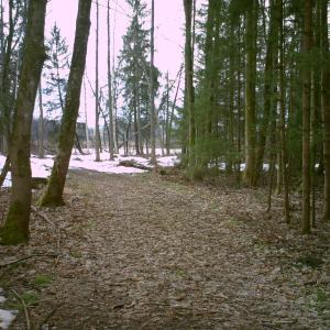Bernau/Förchensee (Naturschutzgebiet)