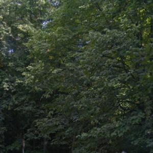 Filderauffahrt Hedelfingen / Lederberg