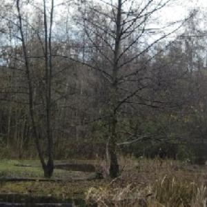 Forststration Rheinelbe